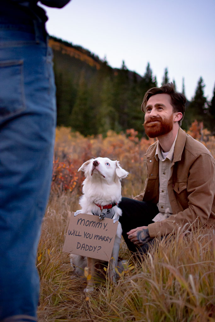 Man kneeling proposing to woman with a sign on cute dog asking woman to marry him
