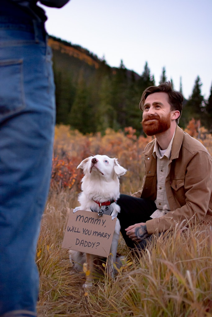 "Man proposing to woman with a sign on dog that says ""Mommy will you marry Daddy?"""