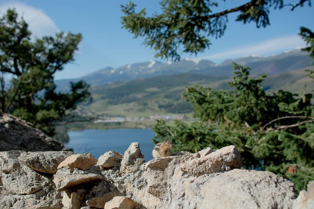 Chipmunk sitting on rocks at Sapphire Point in Dillon Colorado