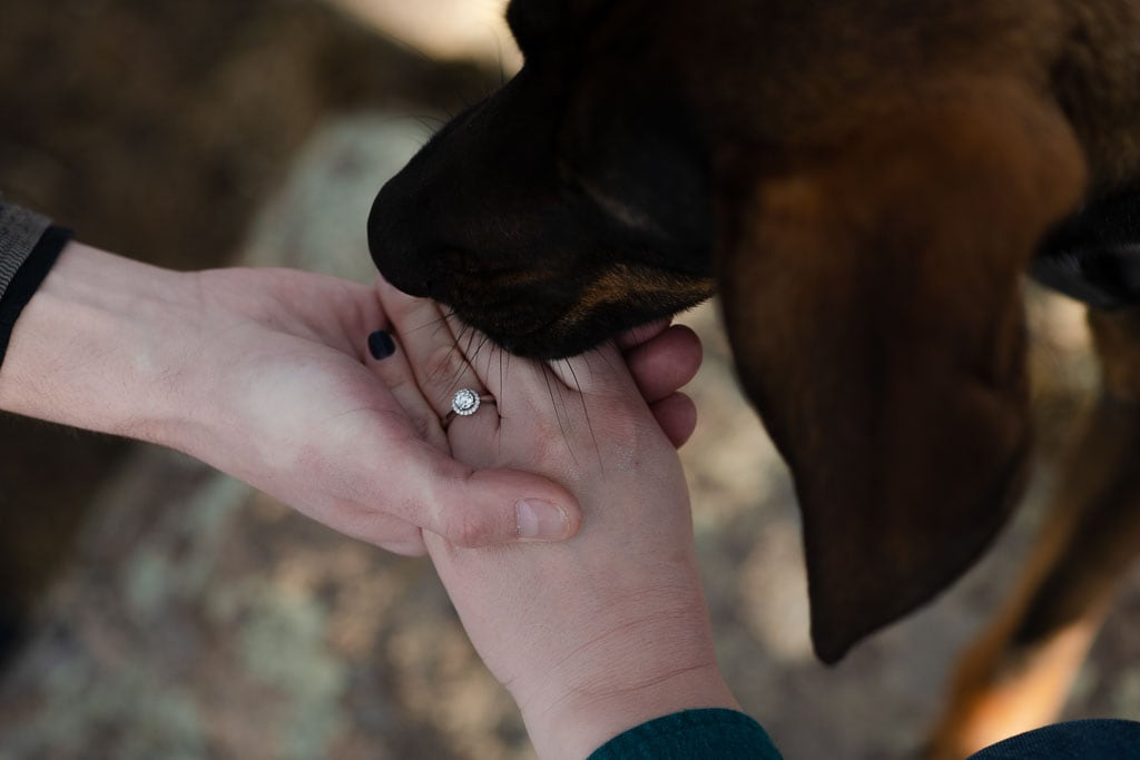 Groom holding bride's hand while dog with floppy ears sniffs the wedding ring