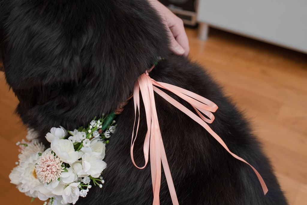 Pink and white flower collar tied around black dog's neck with a ribbon tied in a bow