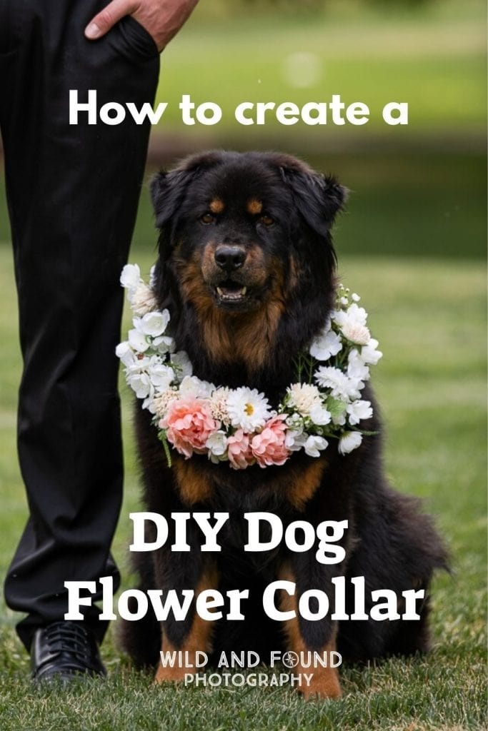 Step by step tutorial on creating a flower collar for your dog for your wedding
