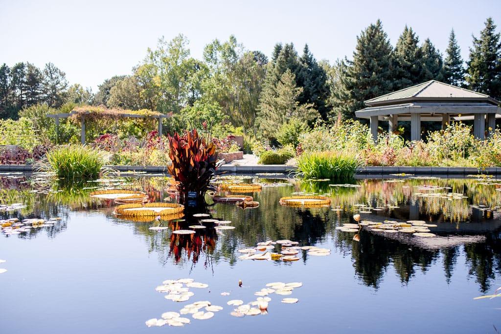 Denver botanic gardens pond and plants and gazebo